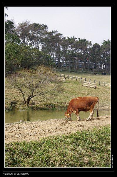 春節旅遊之其一~飛牛牧場